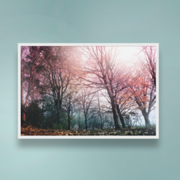 framed nature photography thumbnail